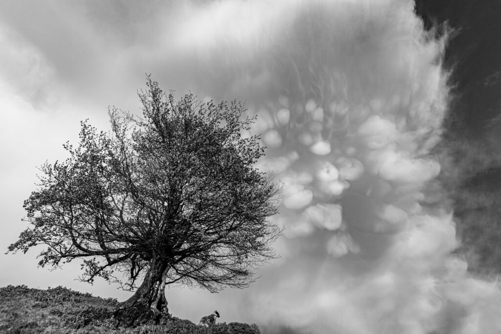 2nd Place Mammatus and the Beech in Oxfordshire by Paul Willson @pauljwillson